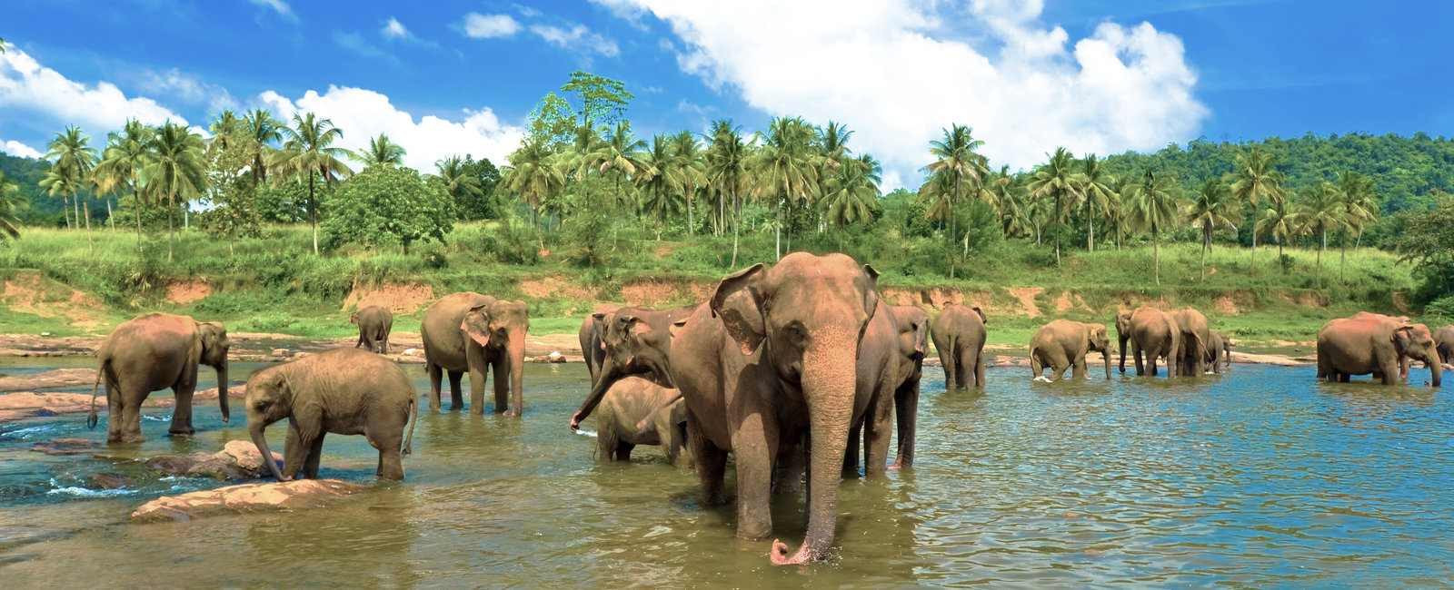 Volunteering placements in Sri Lanka