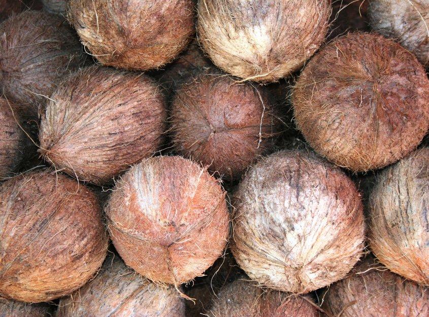 Coconuts in Sri Lanka